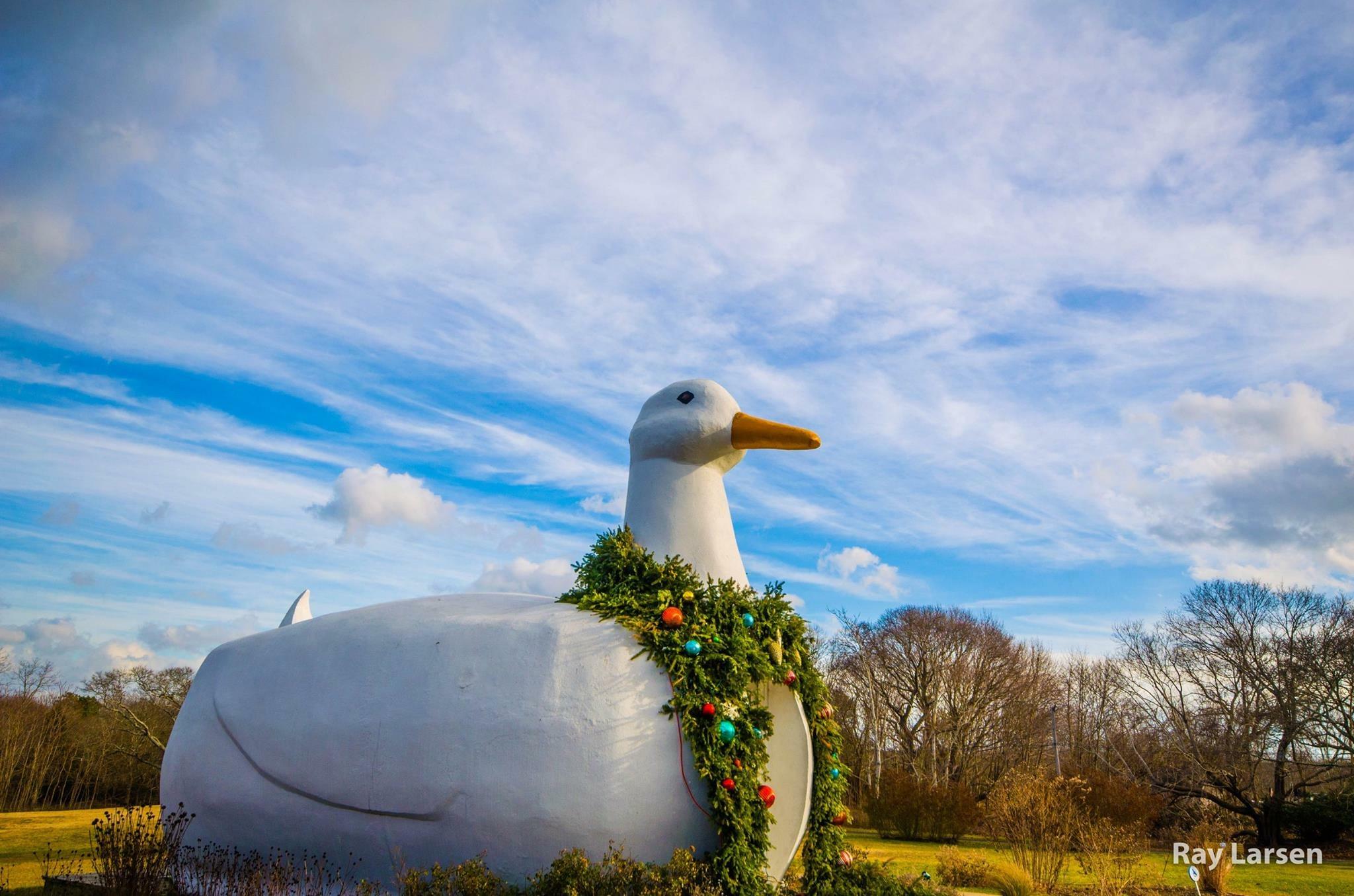 Flanders Duck
